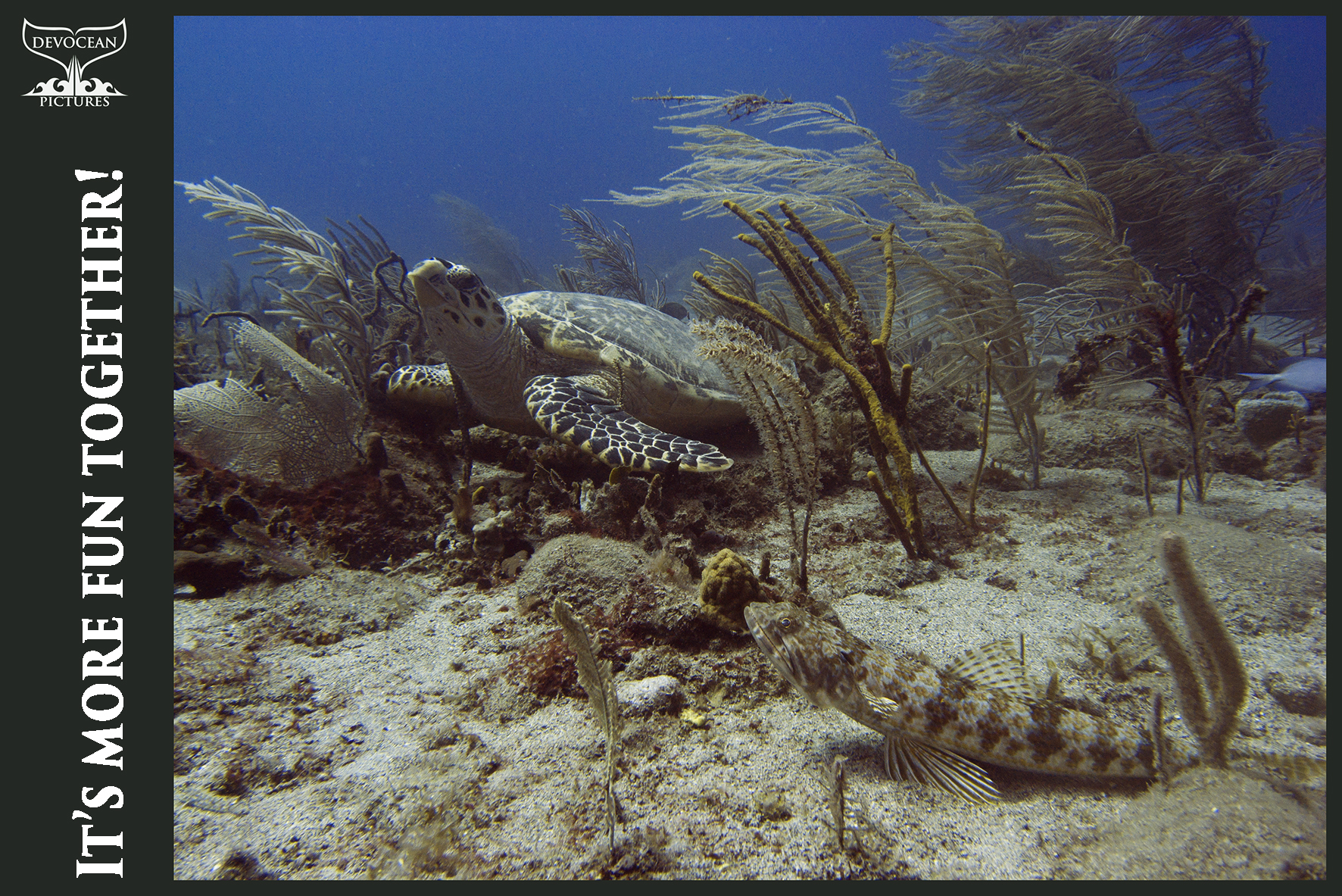 "Hawksbill Turtle and Lizard Fish are hanging out in at the dive site ""Triple Wreck"" (St. Eustatius, Caribbean Netherlands). Current and surge are moving the soft corals around them."