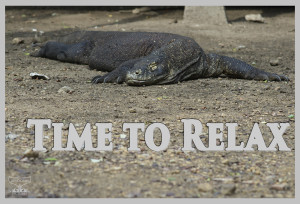 A Komodo Dragon is chilling in the sun, digesting his last meal. Text: Time to relax. Logo of Devocean Pictures.
